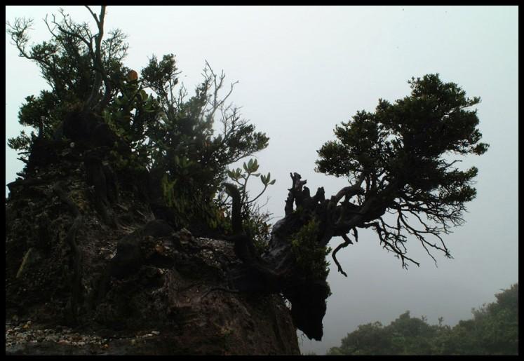 landscapes 02